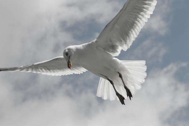 DIVIDED: Readers are split on seagulls