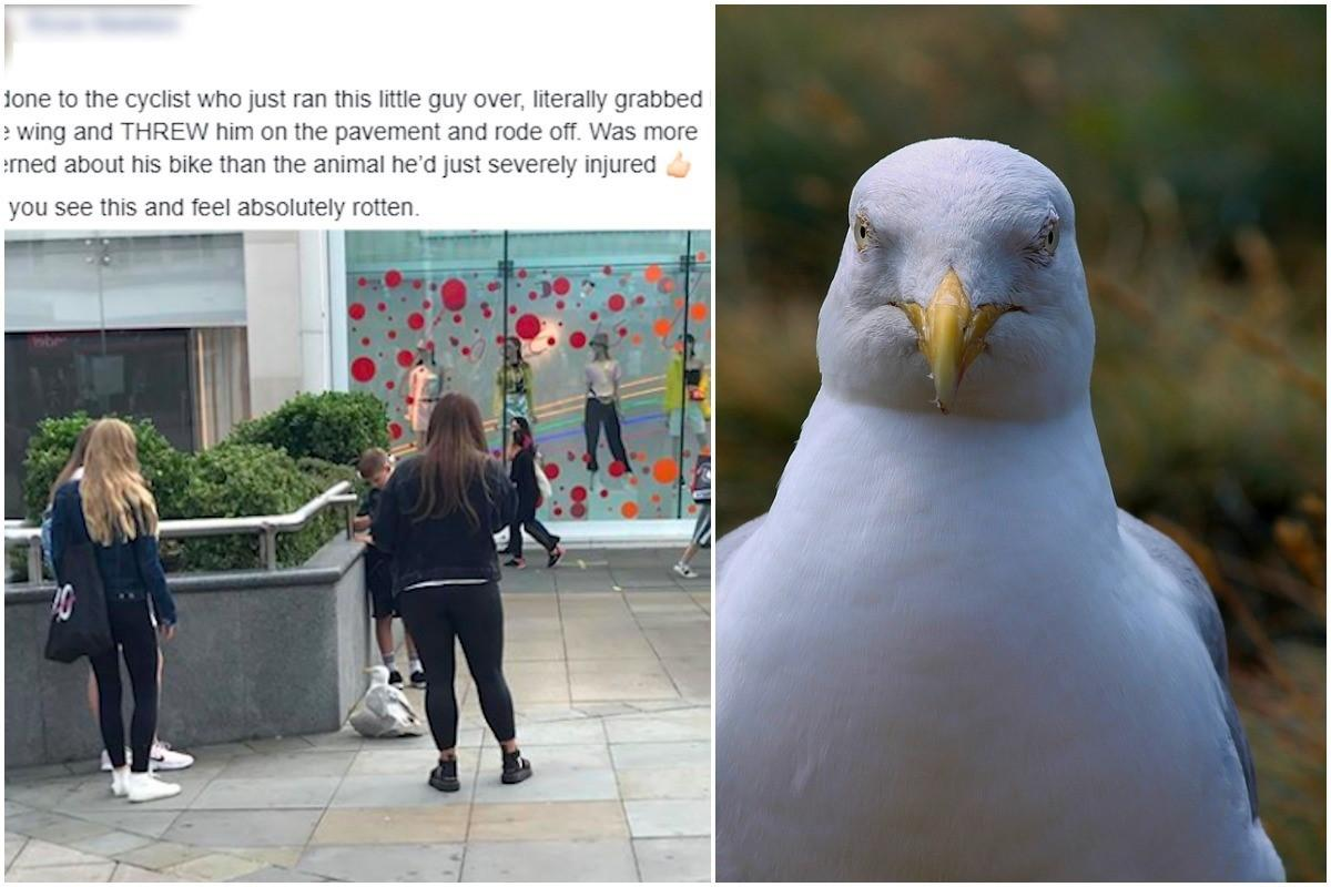 Cyclist runs over seagull, grabs its wing and slams it onto