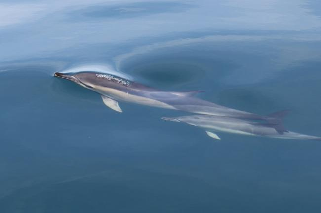 Could dolphins be swarming to Sussex? Photo: Katrin Lohrengel