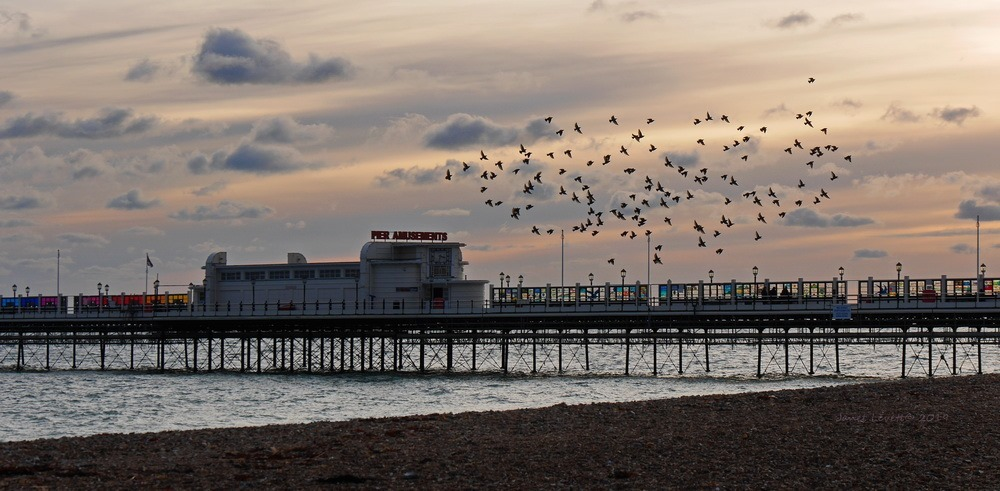 A murmuration of starlings over Worthing Pier by Janet Levett