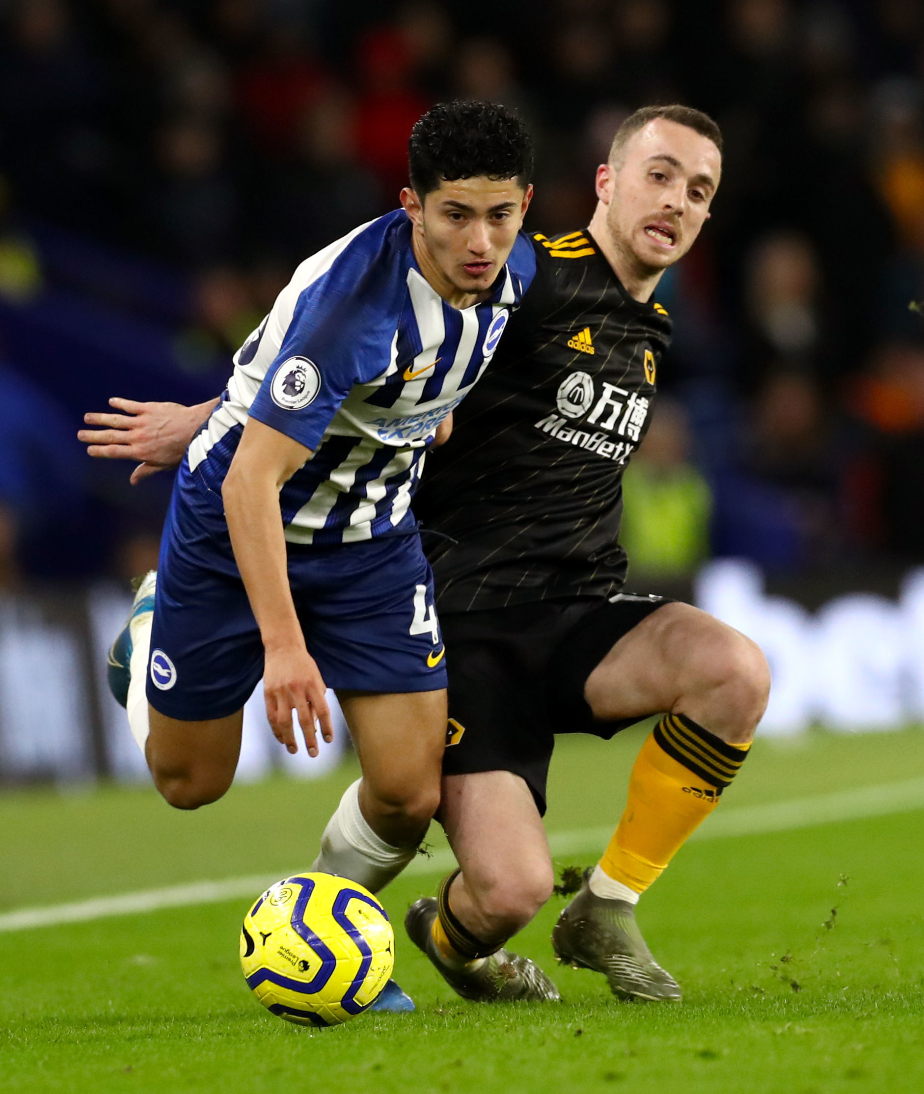Steven Alzate happy to be Graham Potter's flexible friend in Albion line-up