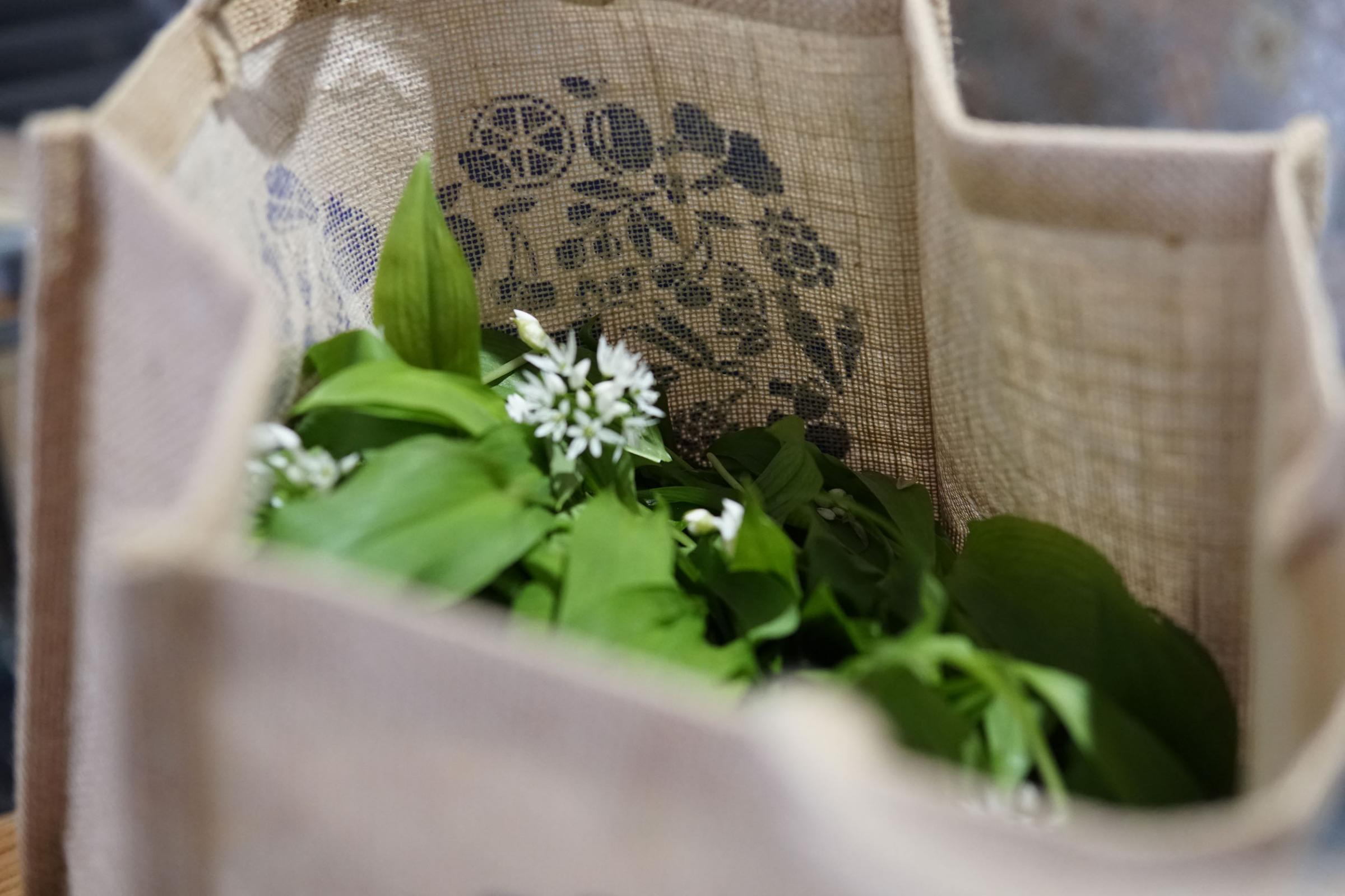 Hedgerow & Forest Foraging - LEARN.COOK.DINE