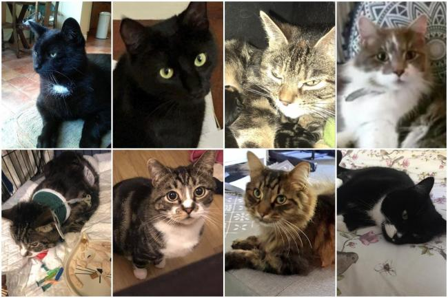 "Cats killed by the ""Brighton Cat Killer"""