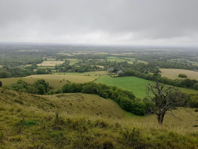 Rangers hope to restore 400 square kilometres of lost Sussex woods to its former glory