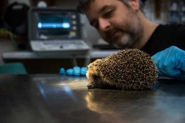 The Argus: Trevor with a rescued hedgehog