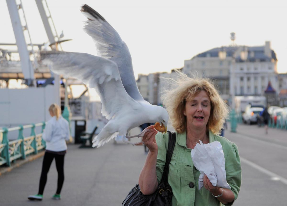 Brighton beach was found to be the number one location for the most seagull attacks in the UK