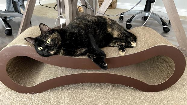 The Argus: The scratcher is perfect for scratching, rubbing, and sleeping. Credit: Reviewed / Kate Tully Ellsworth