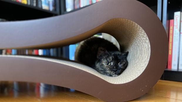 The Argus: Shadow loves every part of the PetFusion lounger. Credit: Reviewed / Kate Tully Ellsworth