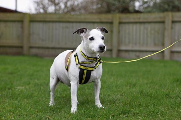 The Argus: Bob Dylan spent just 25 days in the Dogs Trust Rehoming Centre in Shoreham