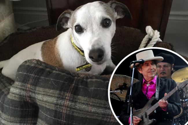 Bob Dylan was rehomed by the Dogs Trust after his owner died of Covid-19