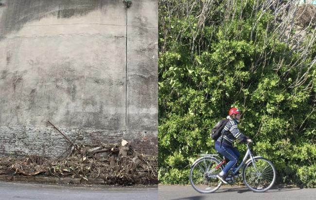 The Madeira Terrace Green Wall was partially cut down for a 'possible' cycle lane