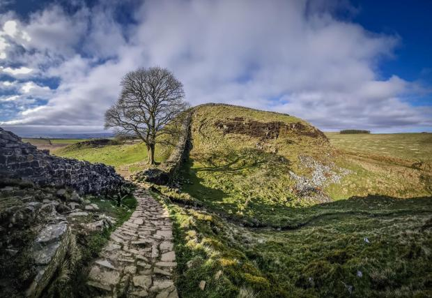 The Argus: Sycamore Gap in Northumberland