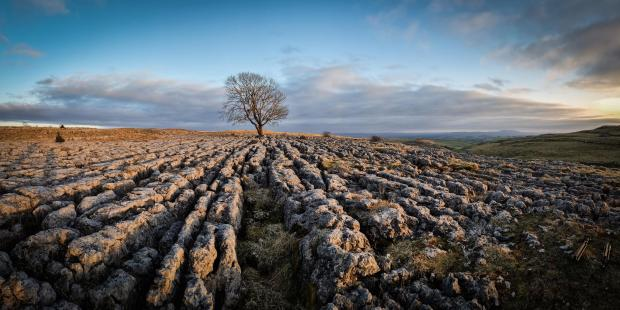 The Argus: The lone tree near Malham in North Yorkshire