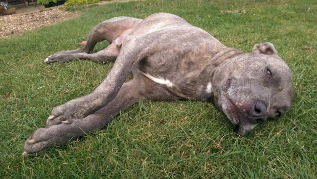 The Argus: Toby was only three days away from being euthanized