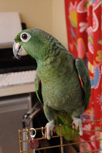 Parrot rescued from Brighton park