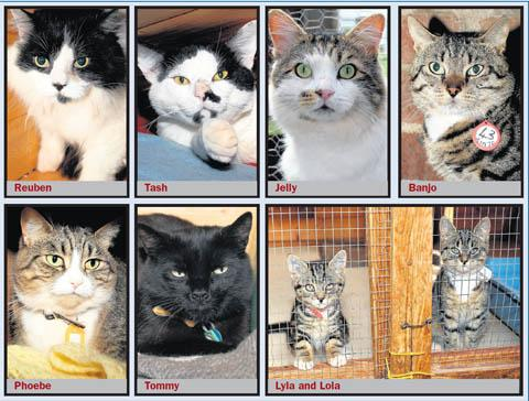 SAVED: All these cats have been given new homes