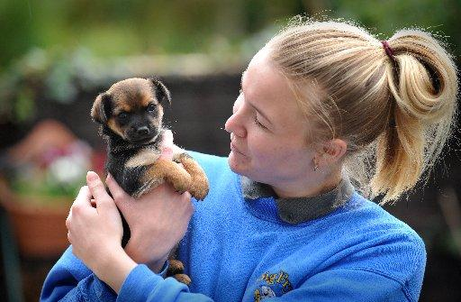 Plea over 'stolen' puppy