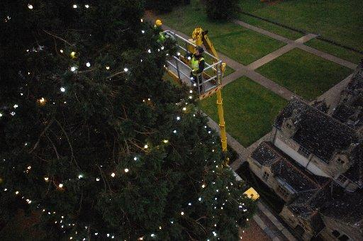 The Argus: In the cherry picker to decorate the Wakehurst Place Christmas tree