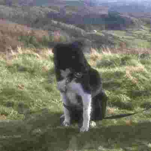 Missing dog Bute was found thanks to a Facebook campaign