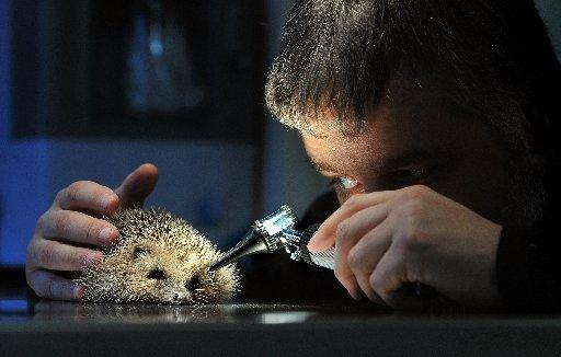 East Sussex Wildlife Rescue offers the chance for people to help hedgehogs
