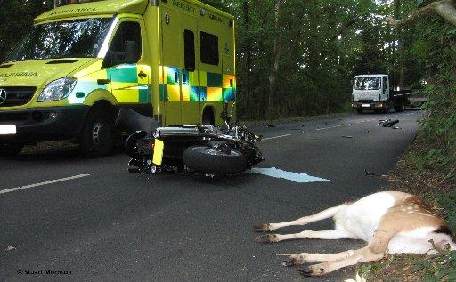 Drivers are warned to watch out for deer on the roads as fatalities are increasing across Sussex