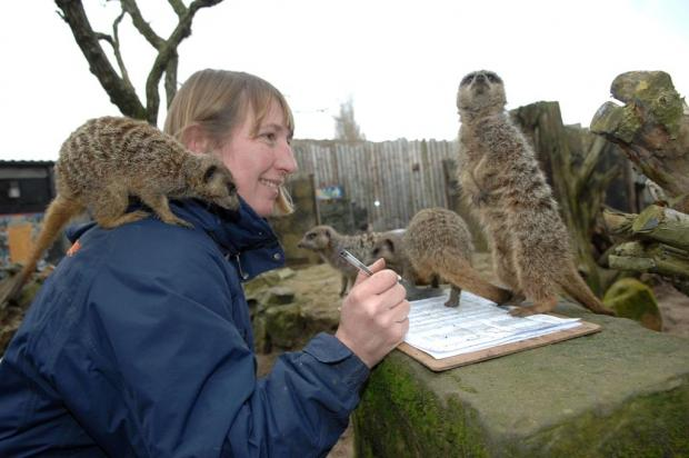 Drusillas keepers take stock of task at Sussex zoo