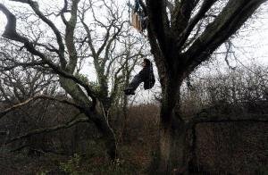 The Argus: A protester in the trees at Combe Haven