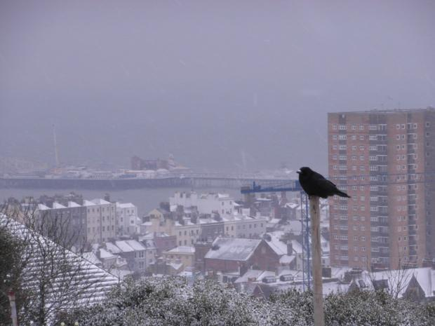 The Argus: Snow has been falling across Sussex today. Send us your snow photos by emailing them to news@theargus.co.uk or text them by texting SUPIC to 80360