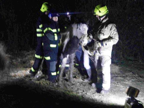 Emergency workers with the starving horse