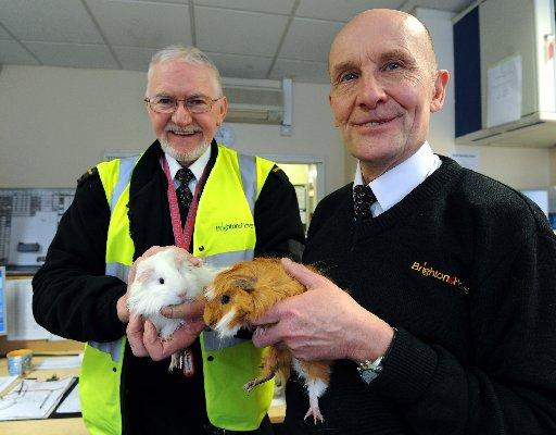 Den Palmer and John Nutting from Brighton and Hove Buses with the two abandoned guinea pigs