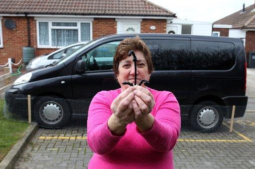 Lancing woman's brake cables targeted by fox
