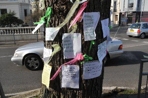 TREE: Messages of support have been attached to the elem in Vernon Terrace, Hove.