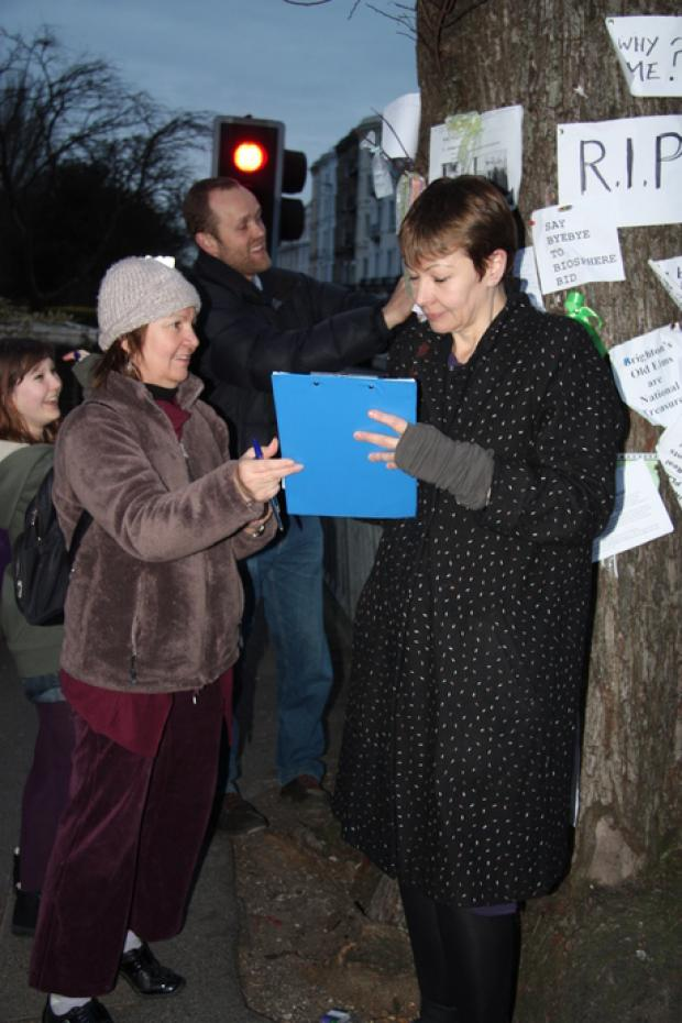 PETITION: Brighton Pavilion MP Caroline Lucas signs up to save the elm