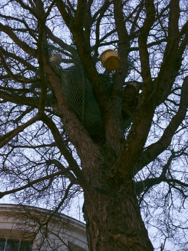 Elmgate saga could be over by the afternoon, tree protesters claim