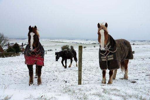 Argus photographer Sam Stephenson has taken this picture of horses off Devil's Dyke Road