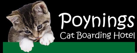 Poynings Cat Boarding Hotel