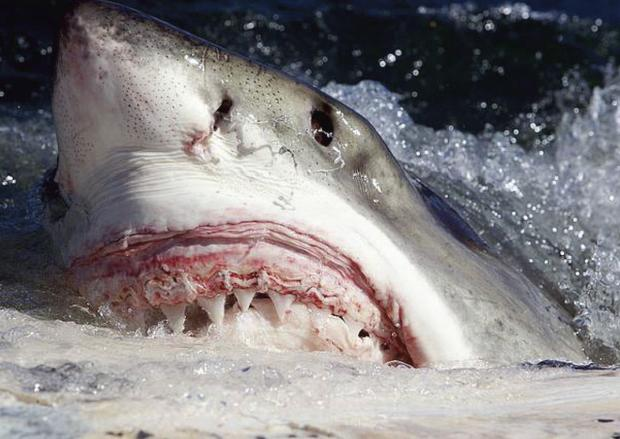 The Argus: Sussex surfer survives shark attack by punching great white in the face