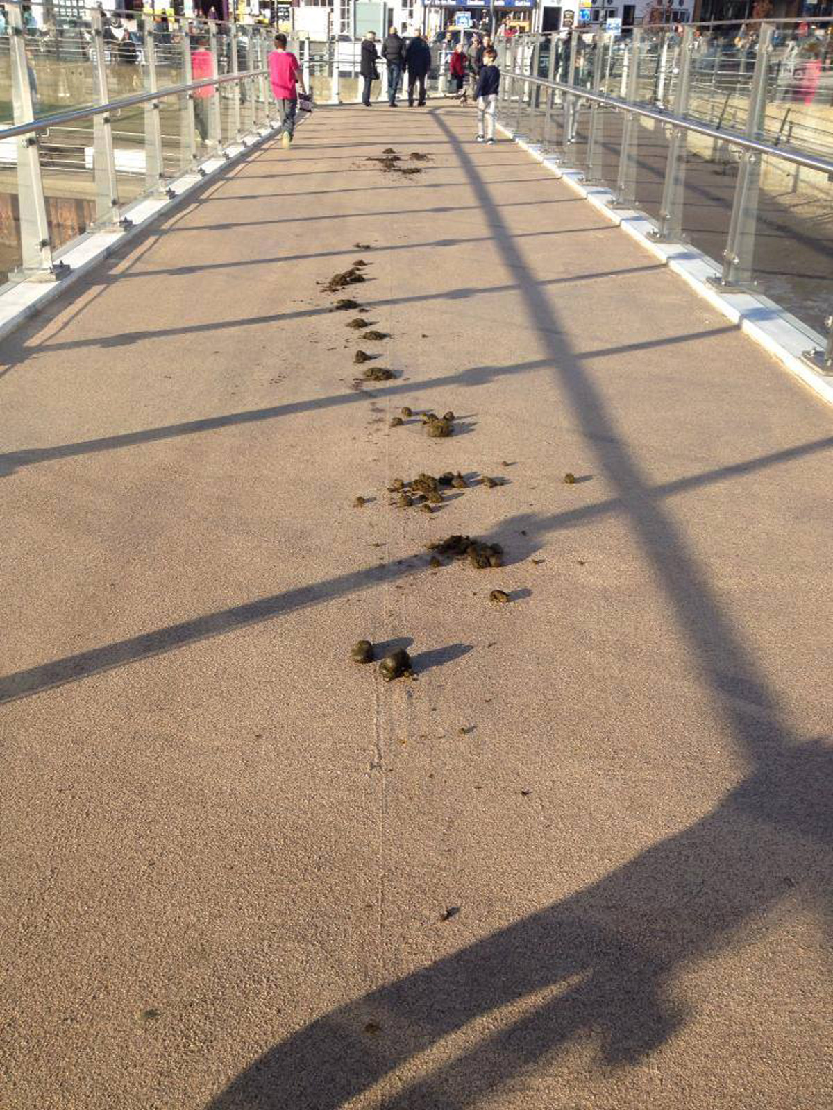 Horses poo on Shoreham's new footbridge