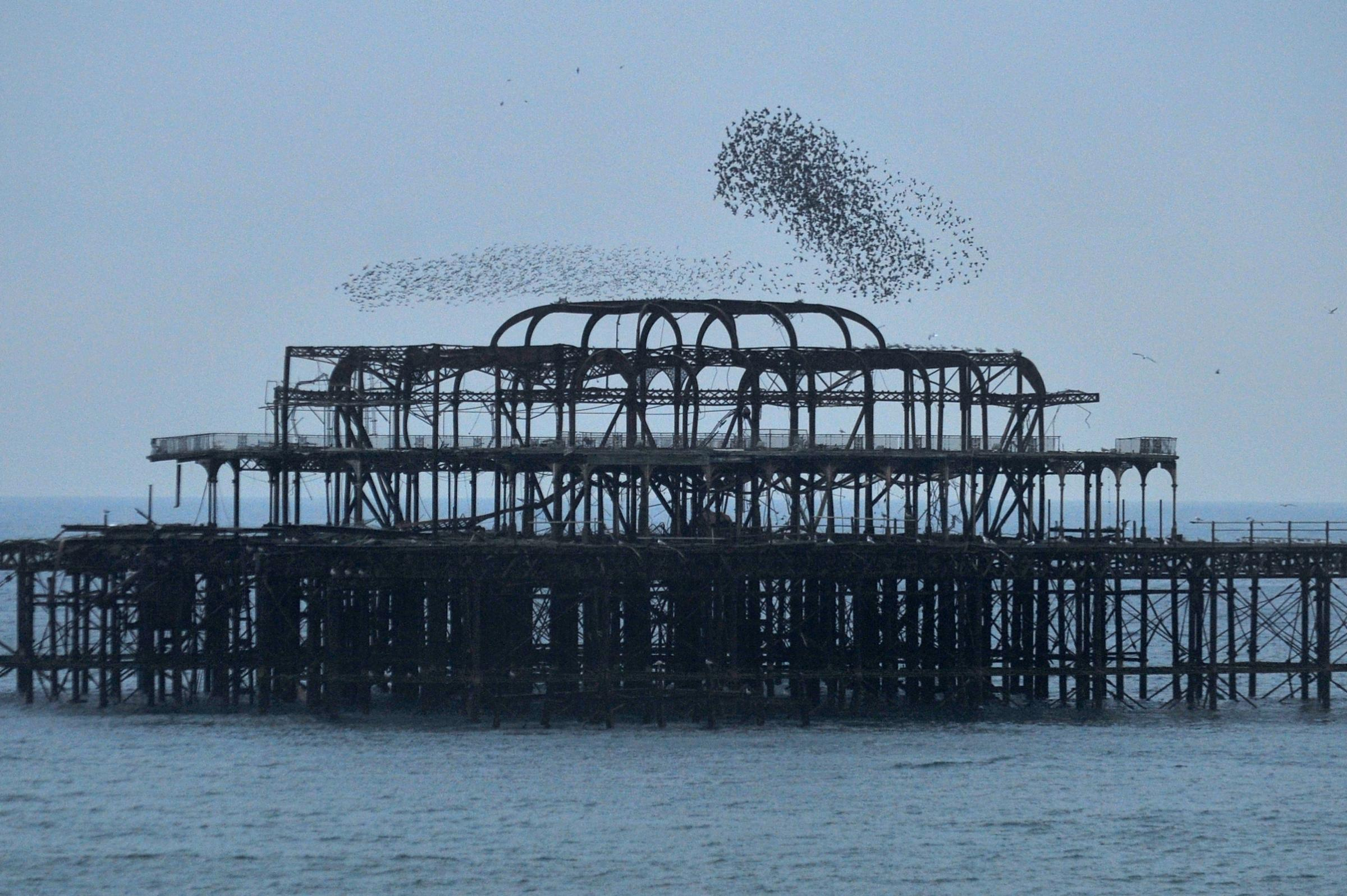 Murmuration over the West Pier in 2011