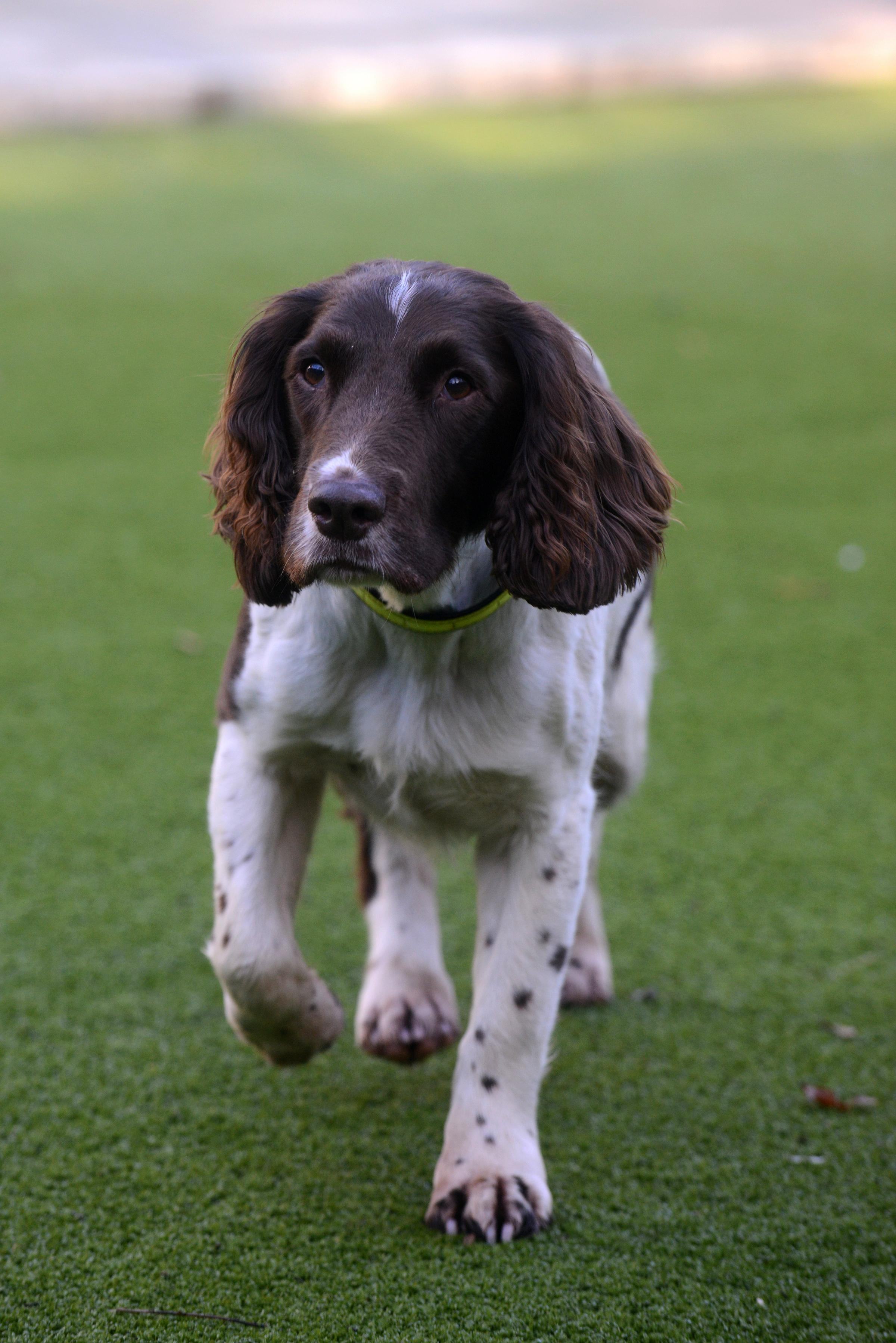 Record-breaking Sussex sniffer dog Megan retires at ripe age of eight