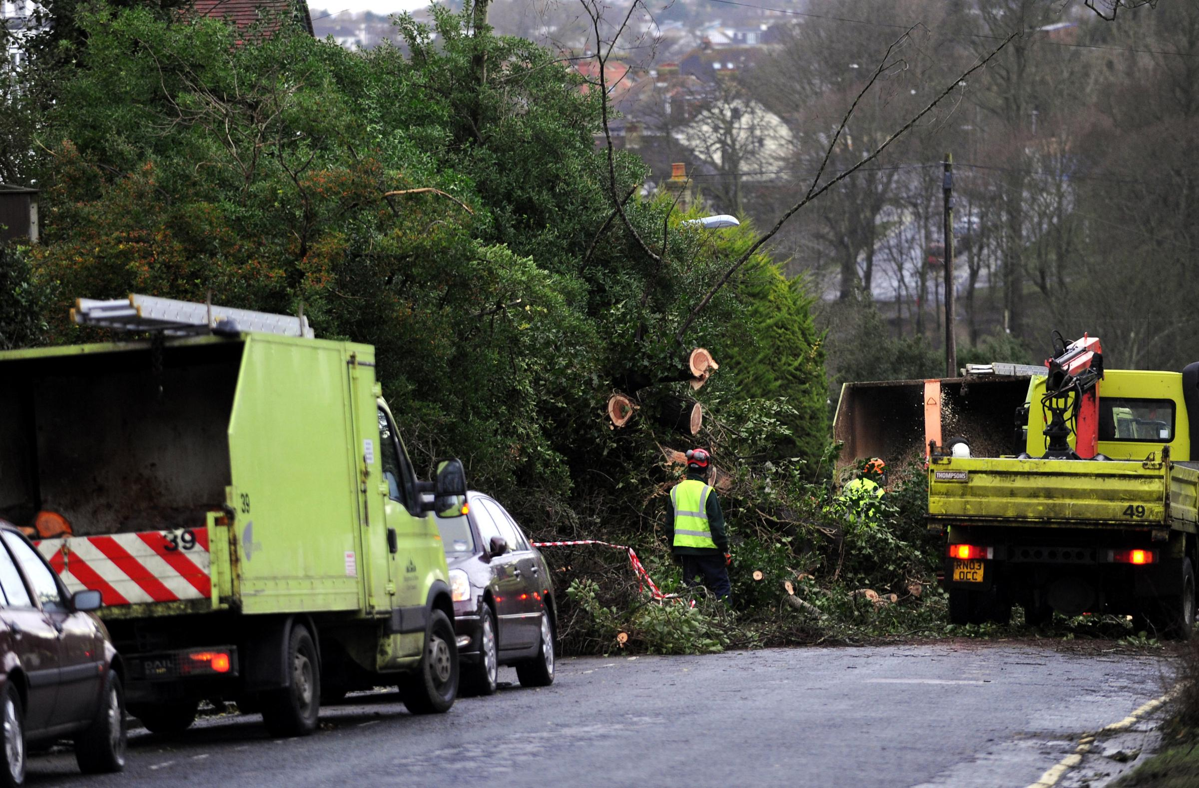 Strong gusts yesterday morning brought down a large tree in Hove Park Road