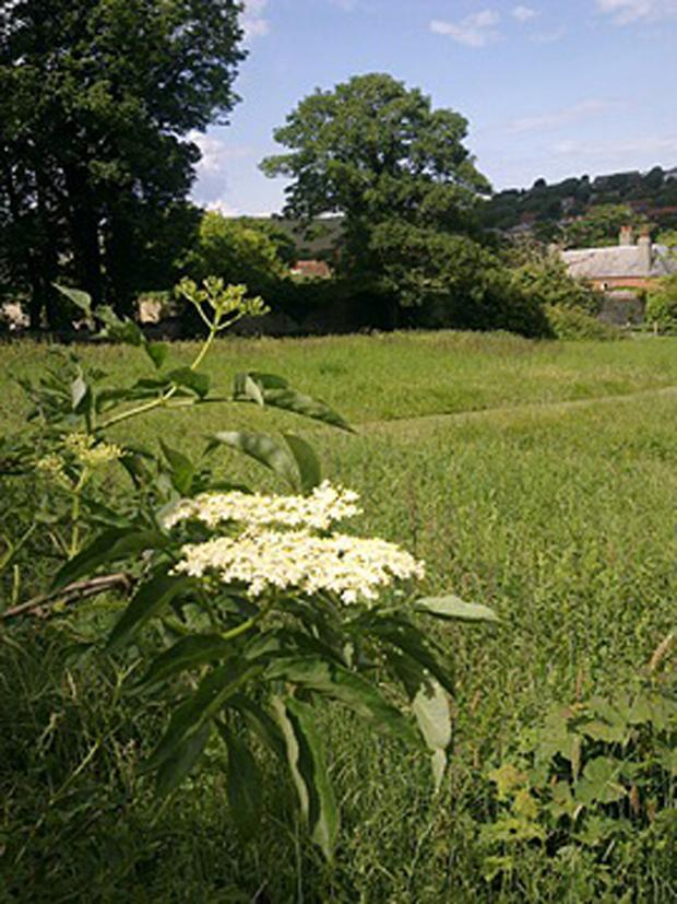 The Argus: A wild meadow in the area where developers want to build up to 315 homes