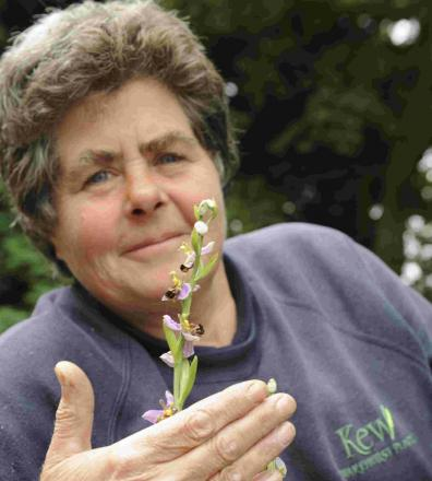 Rare orchid is found at historic property