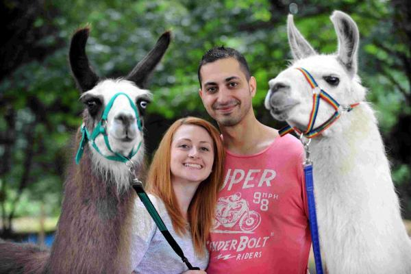 Couple the first to marry at Llama Park, Wych Cross, Forest Row