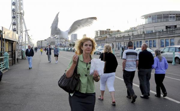 The Argus: Doughnut snatching seagull caught on camera
