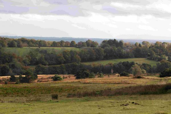 Ashdown Forest, which inspired A.A Milne's One Hundred Acre Wood from the Winnie The Pooh tales