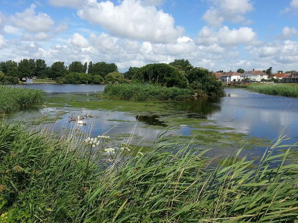 The Argus: Brooklands lake with toxic algae
