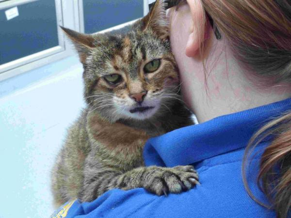 Rita, a 12-year-old tabby in need of a home