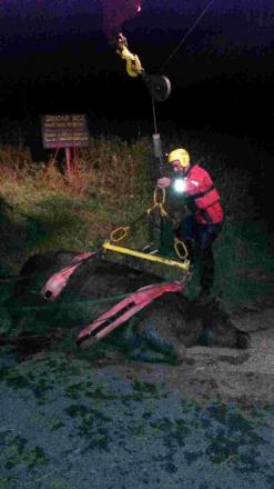 Bull rescued from River Arun