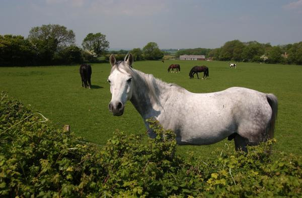 Horses can communicate using their ears, a University of Sussex study finds.  Picture: Simon Dack